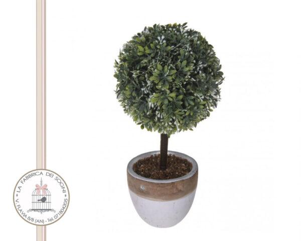 Alberello Maggiorana 26cm